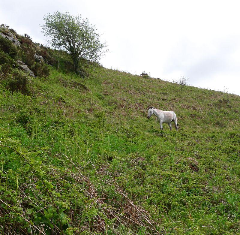 Hillside 4