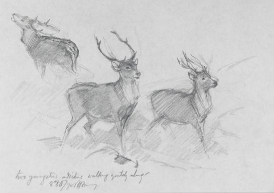 Deer On the Isle of Arran by Barbara Brassey