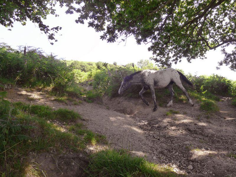 The pony ambles on.
