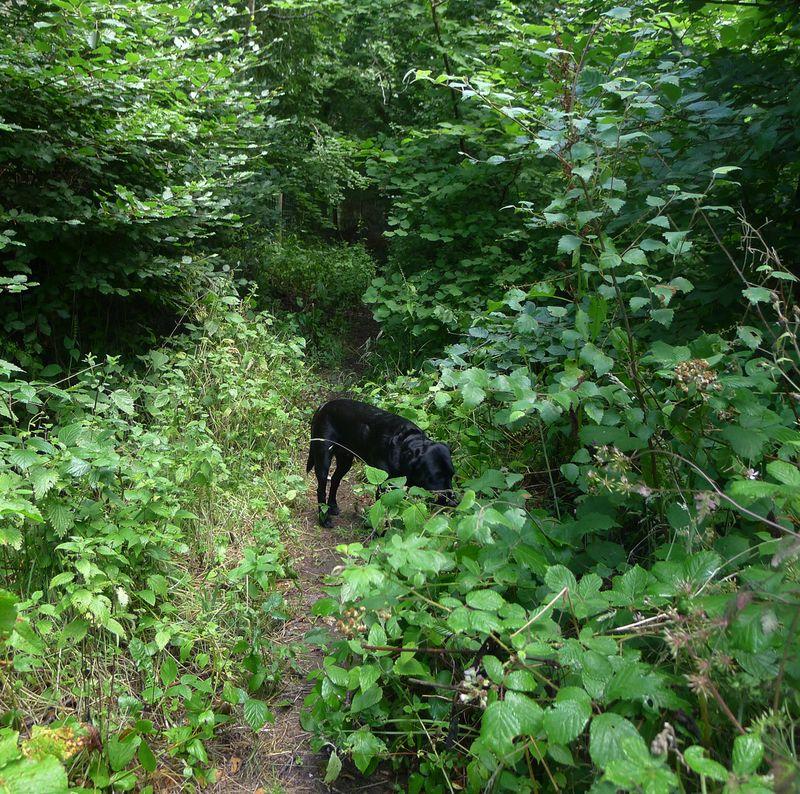 Tilly grazing
