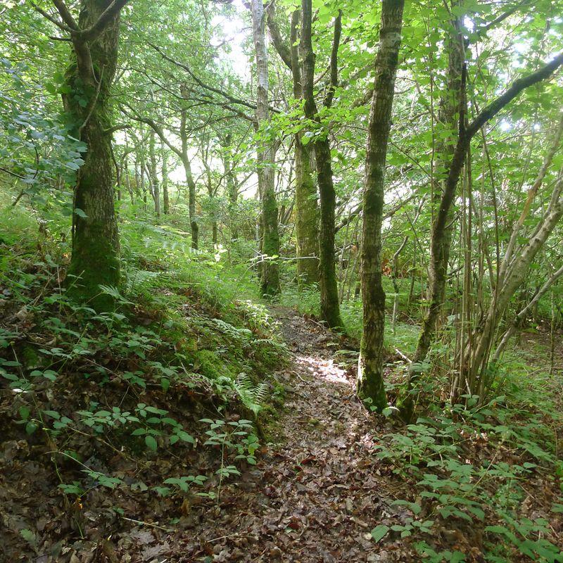 Woodland meditation 1