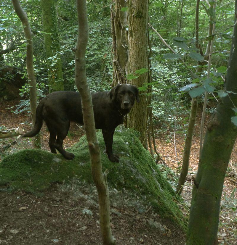 Woodland meditation 5
