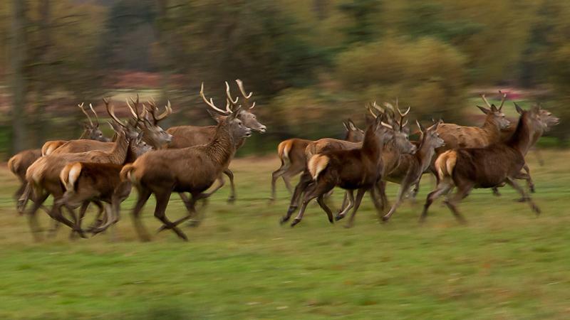 Running Deer by Alex Herbert, 2010
