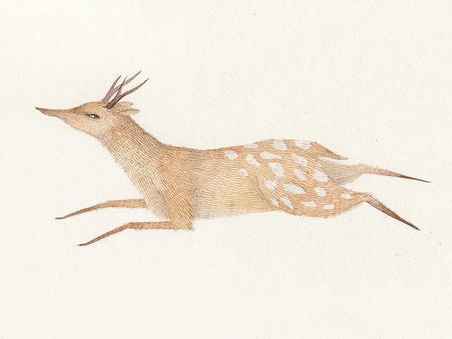 Deer by Juliana Swaney