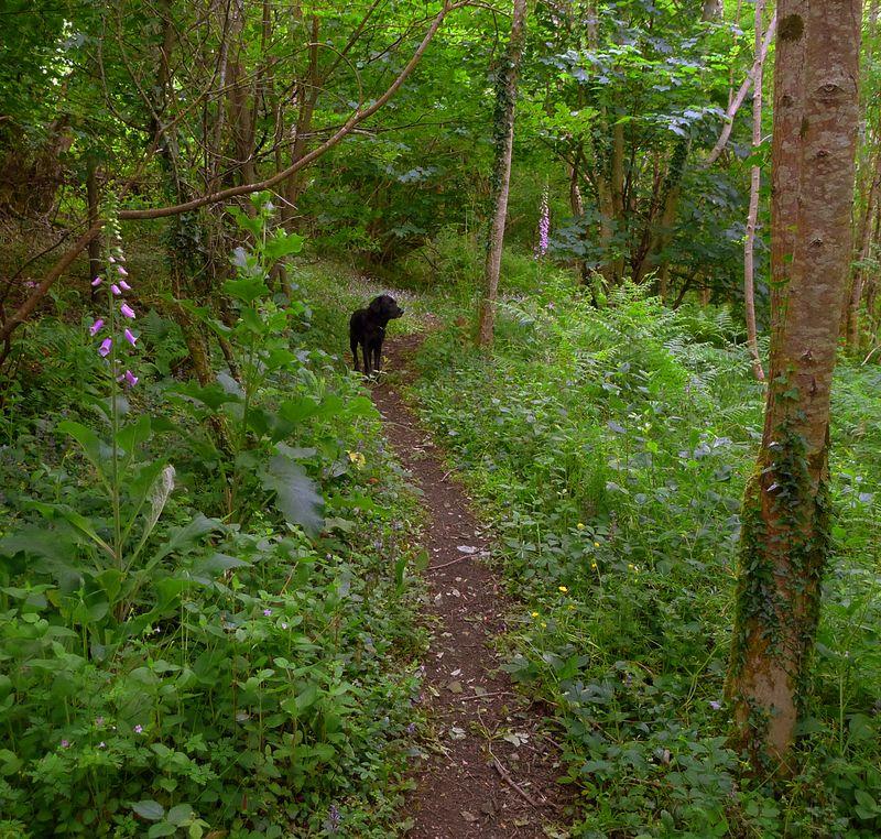The Foxglove path.