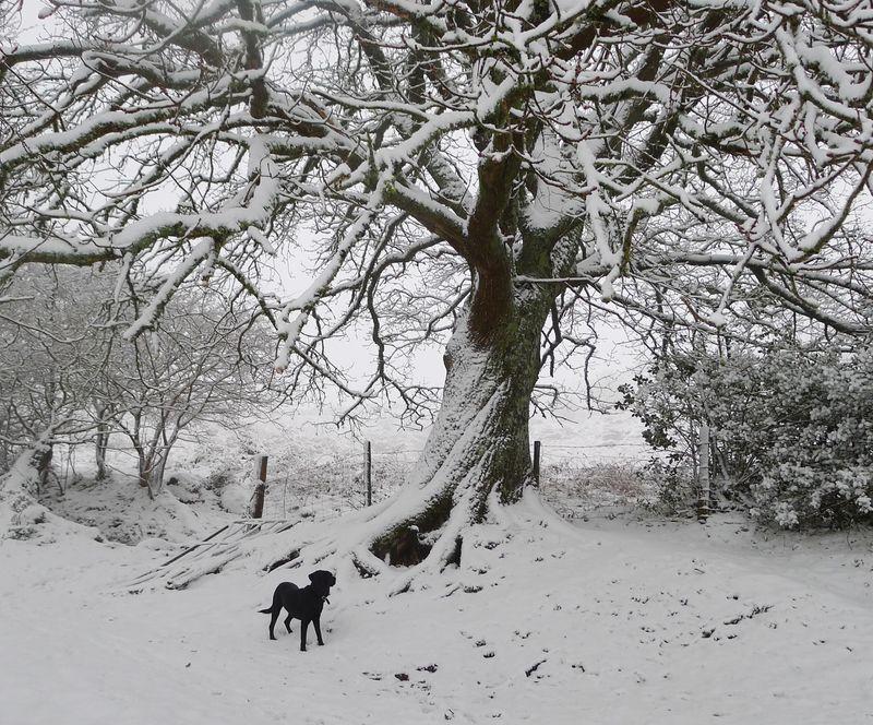 Under the oak, mid-winter