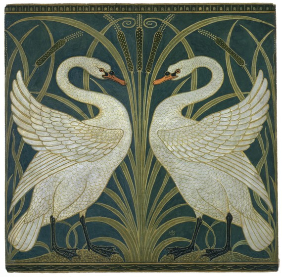 Image result for swan illustration