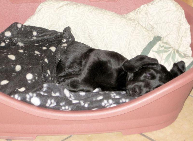 Tilly, October 2009