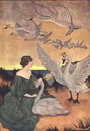 Wild Swans by Milo Winter