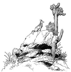 An illustration from Medicine Road by Charle Vess