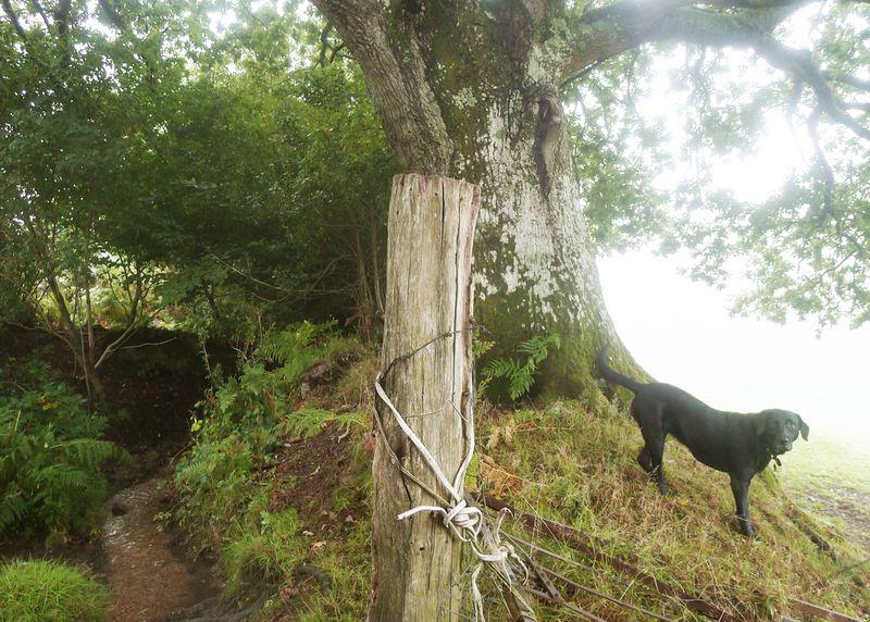 Tilly and the oak elder