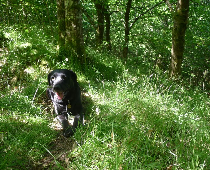 Tilly in the woods, 2