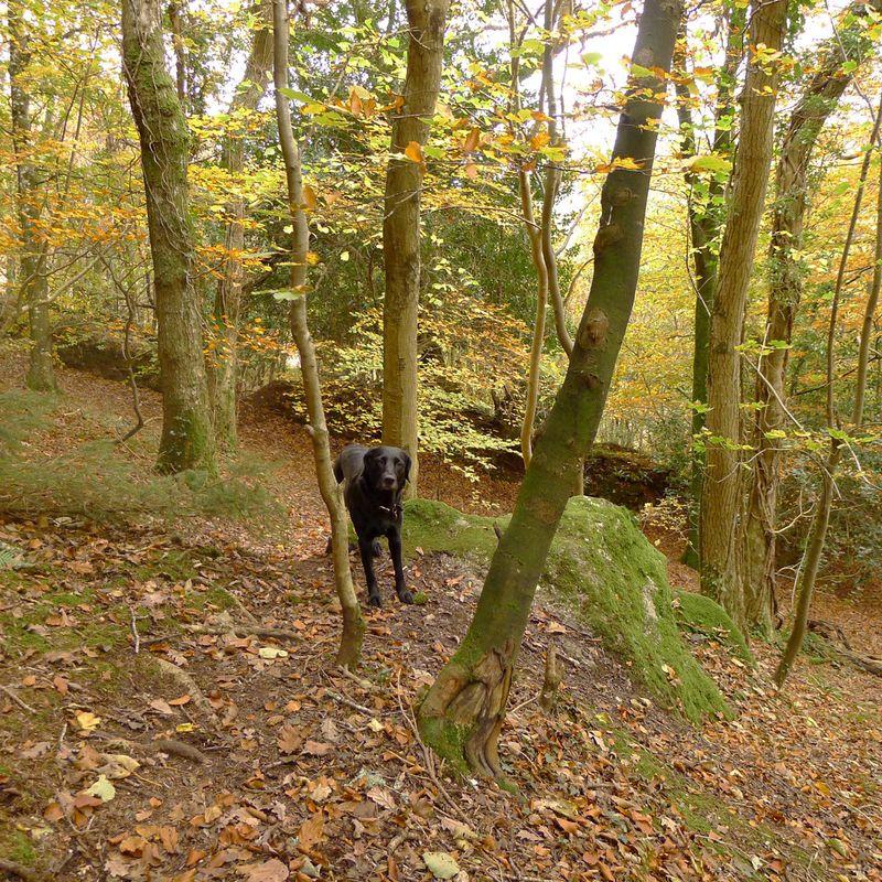 Autumn Tilly
