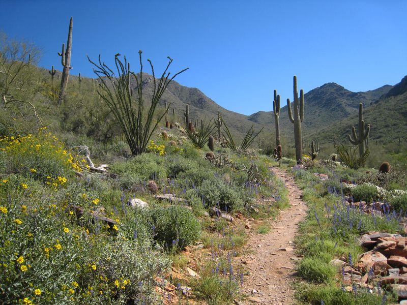 Pathway through the desert
