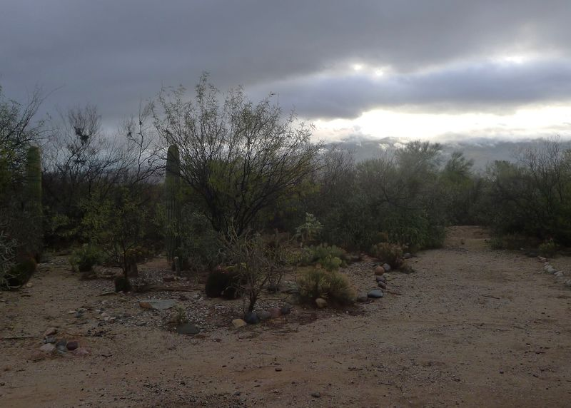 The scents of sage and creosote fill the air