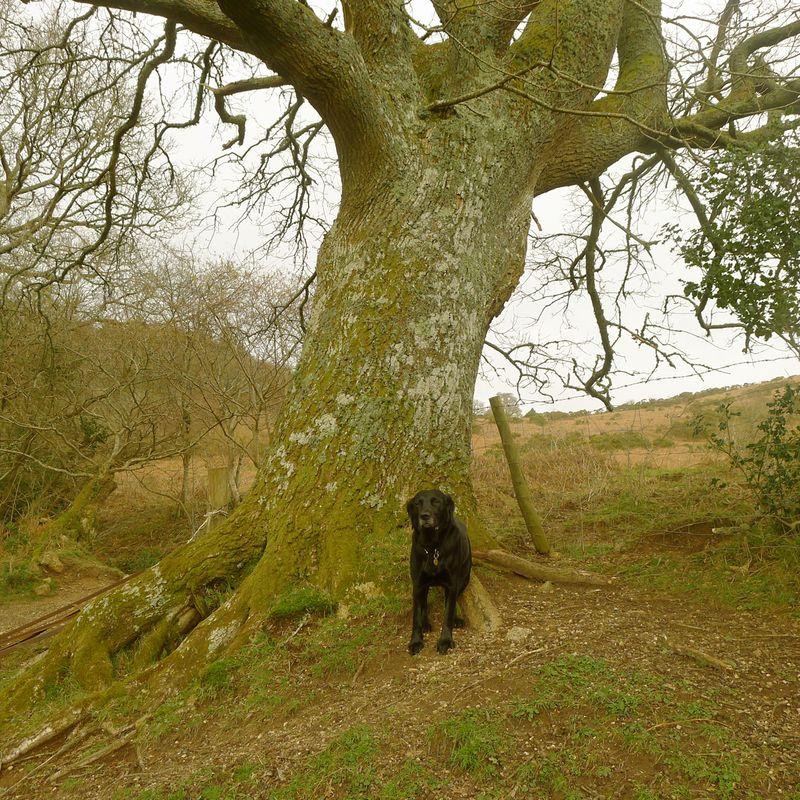 By the oak
