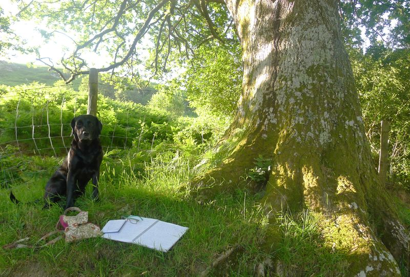 Tilly, notebooks, oak