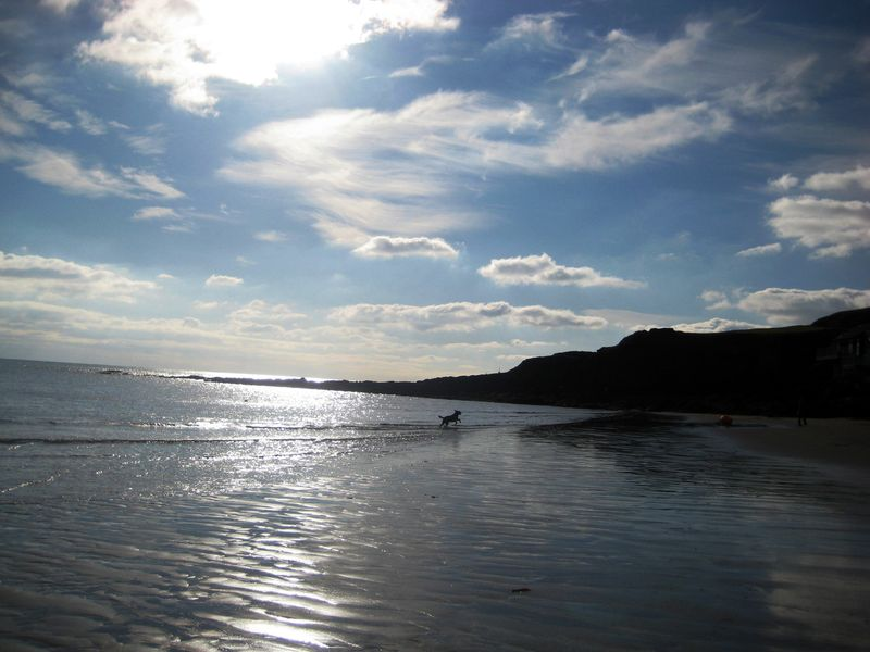 Tilly on the south Devon coast