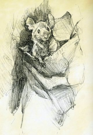 Mouse drawing by Iain McCain