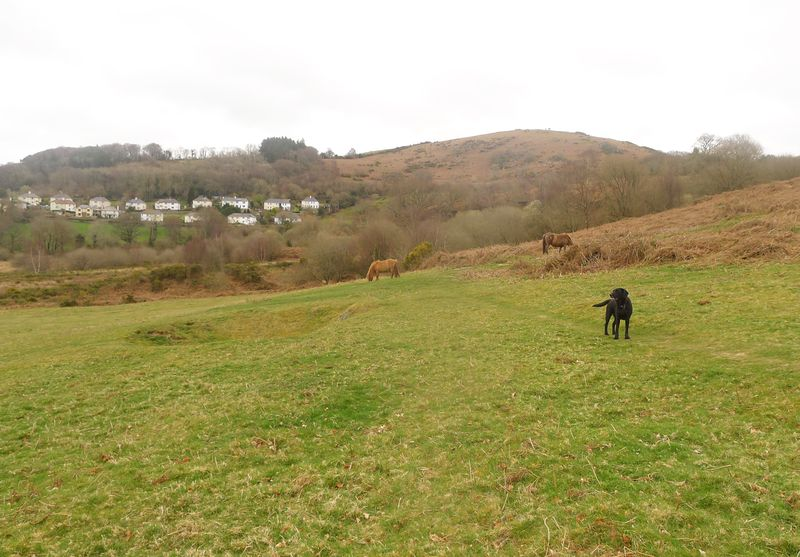 Tilly and the ponies