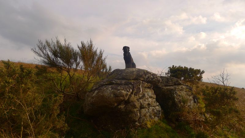 Queen of the Hill