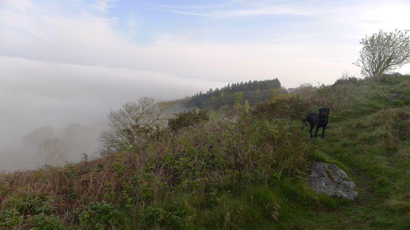 Tilly on the Rocks