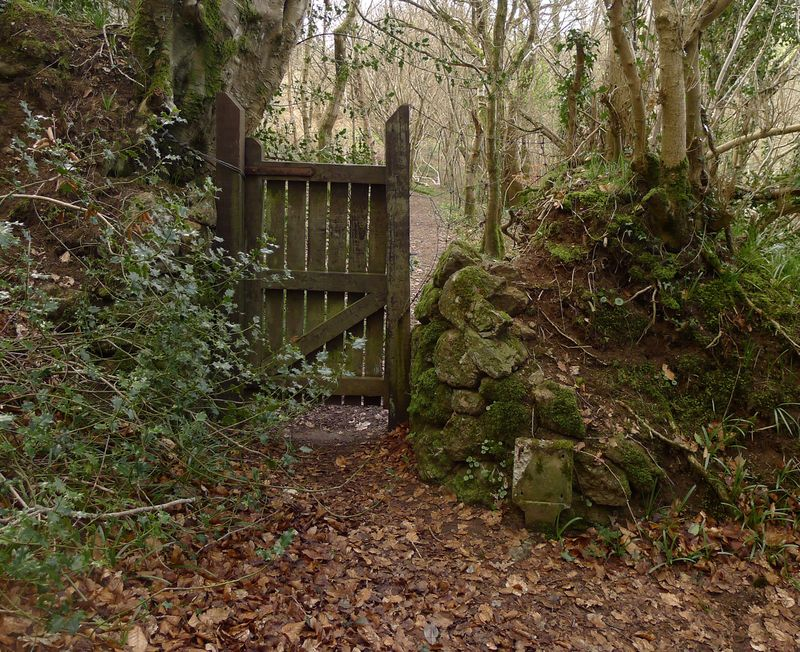Woodland gate, autumn