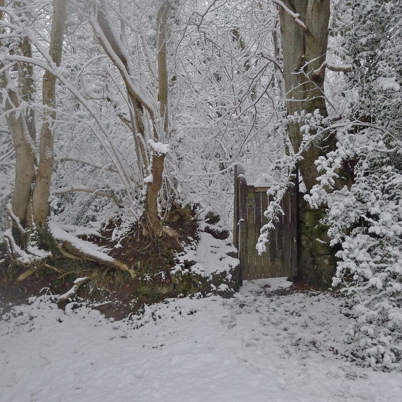 Woodland gate, winter