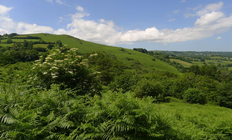 The view towards Meldon