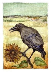 Summer crow by Rima