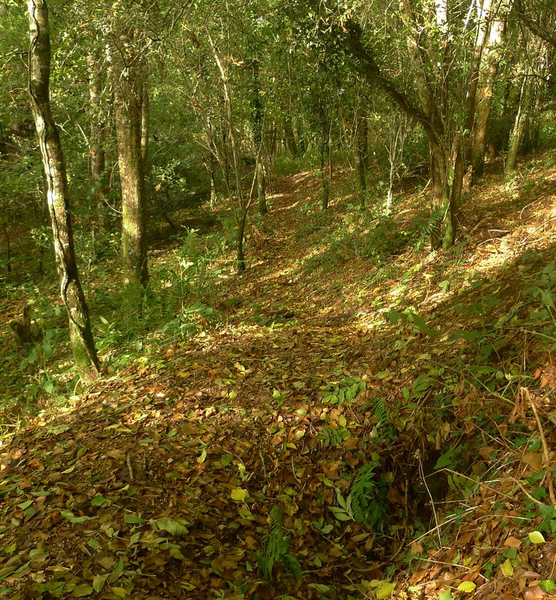 Badger Sett and Pathway