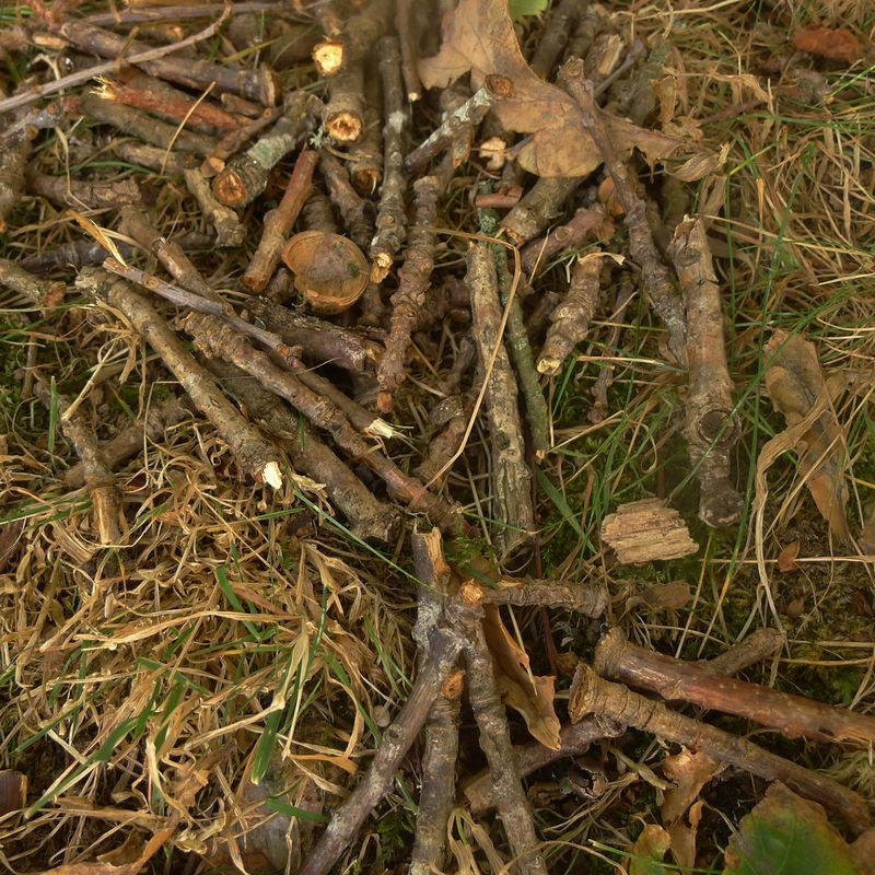 Twig still life