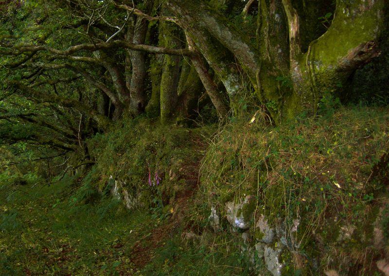 Woodland's edge