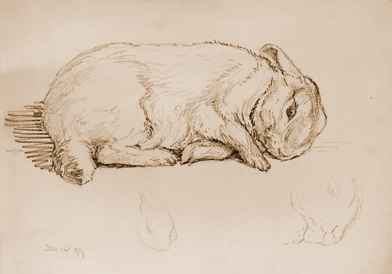 Rabbit drawing by Beatrix Potter
