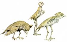 Bird fairies by Alan Lee