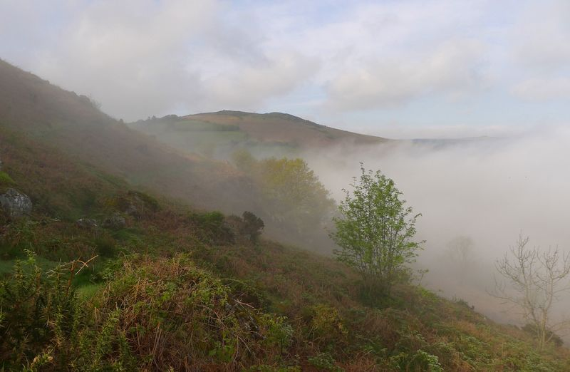 Mist on the Devon hills