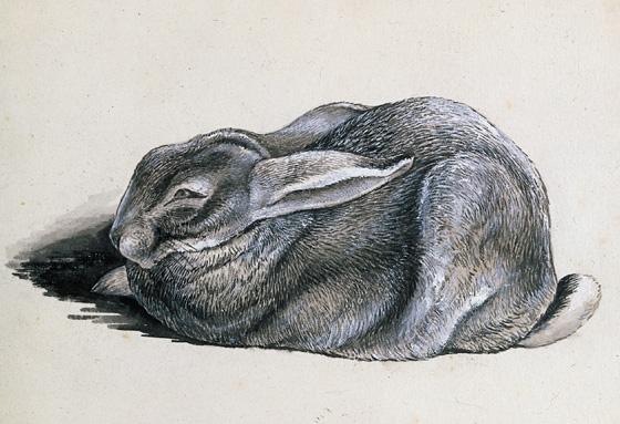 Rabbit study by Beatrix Potter