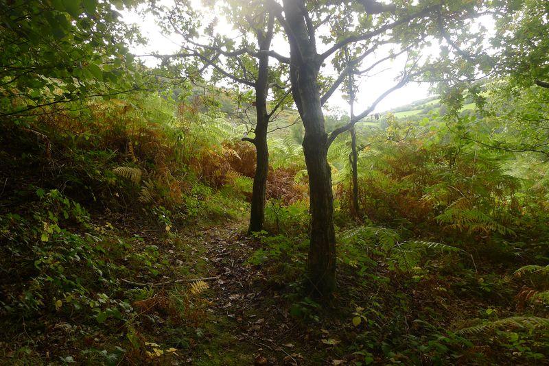 Autumn trees & light