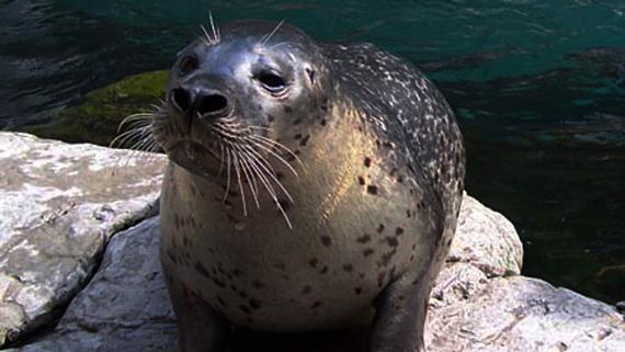 Seal friend