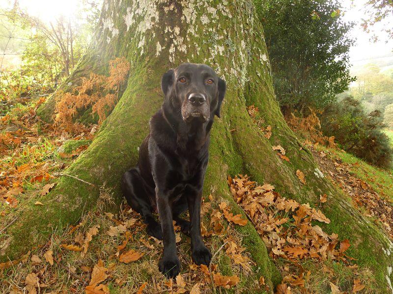 Underneath the oak
