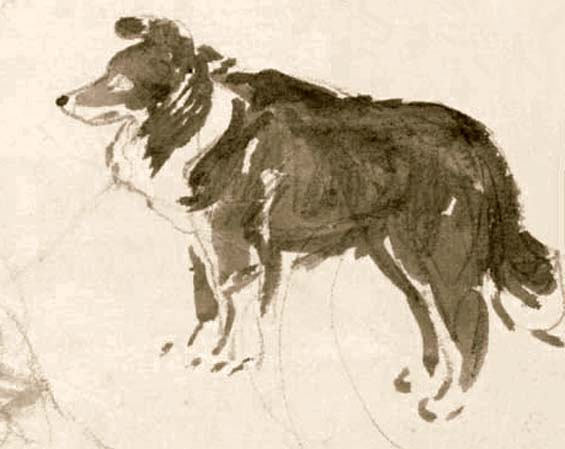 Beatrix Potter's drawing of her sheep dog Kep