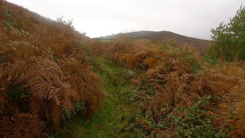 Nattadon Hill 5