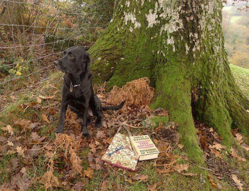 Reading on an autumn morning
