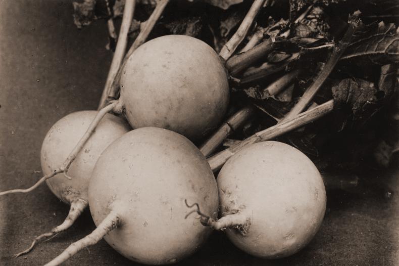 Turnips by Charles Jones