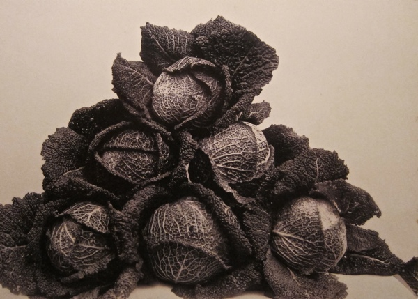 Cabbages (Larry's Perfection) by Charles Jones