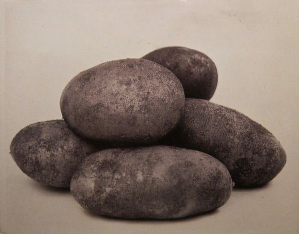 Potatoes by Charles Jones