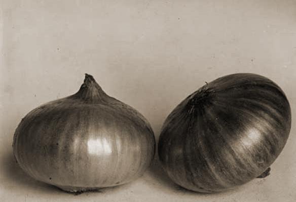 Onions by Charles Jones
