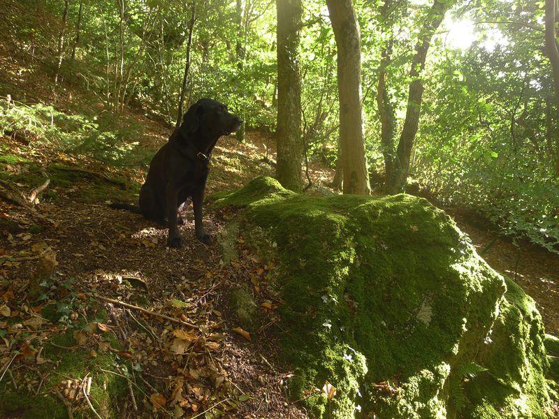 Light & Shadow: A Woodland Meditation