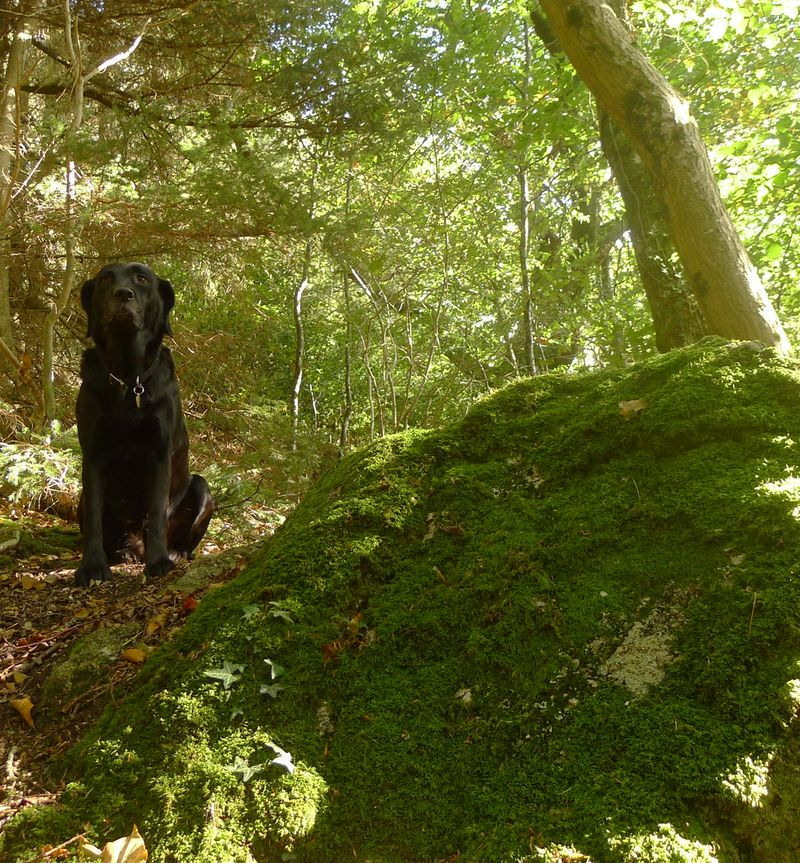 Moss & Rock: A Woodland Prayer
