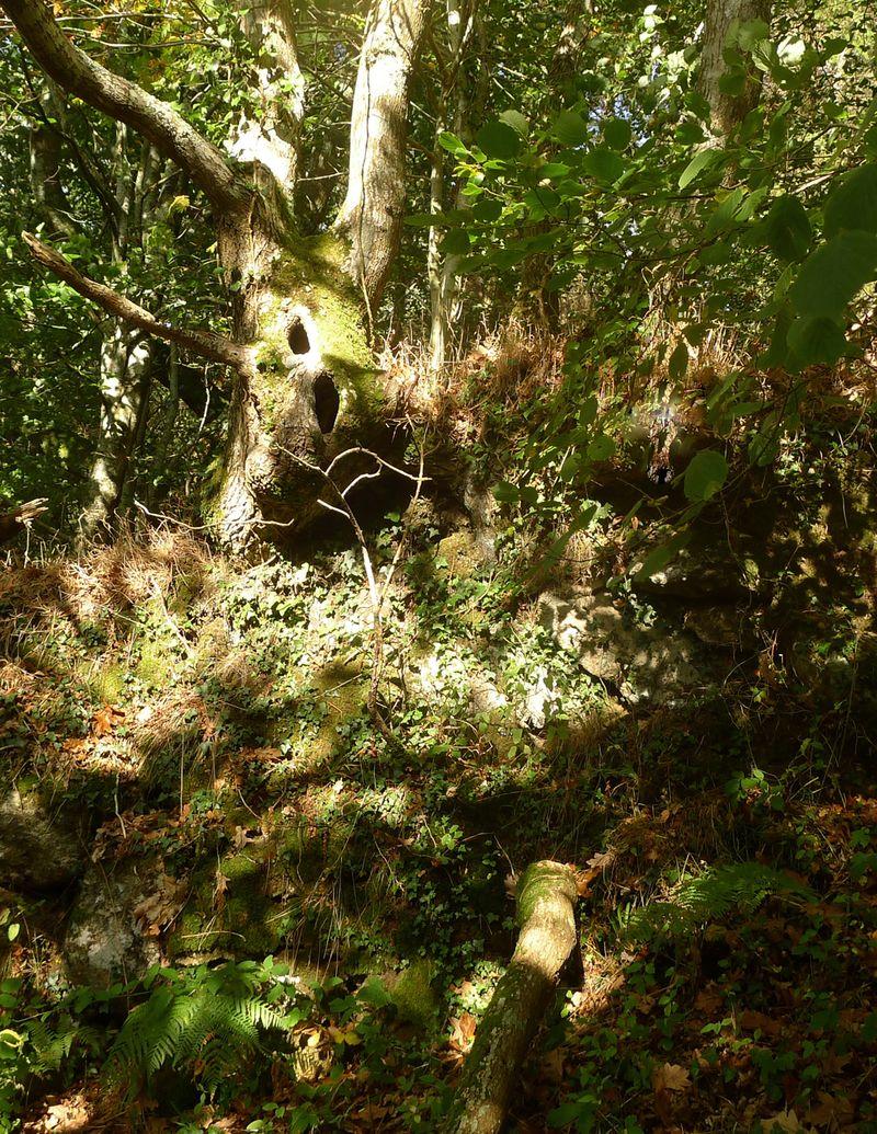 Oak Gardian at the Woodland's Edge.
